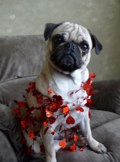1000 Images About PUG VALENTINE CARDS On Pinterest