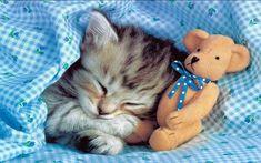 cat sleeping with her friend http://ift.tt/2fthEsa