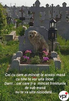 Spiritus, True Words, Bff, Spirituality, Dogs, Animals, Instagram, Quotes, Motivational