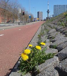 Euromast  foto: Heleen van Zantvoort Rotterdam, Sidewalk, Side Walkway, Walkway, Walkways, Pavement