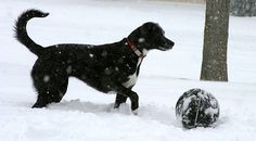 Keep your dog healthy and prevent obesity by using these easy ways to exercise your dog in the winter, plus cold weather safety tips for dogs.