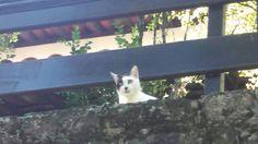 Fotos do Rio. Gato