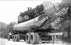 Redwood Log Truckage on the Redwood Highway