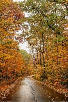 Autumn in Maine