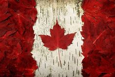 O Canada! Our home and native land! True patriot love in all thy sons command. With glowing hearts we see thee rise, The True North strong and free! From far and wide, O Canada, we stand on guard for. Happy Birthday Canada, Happy Canada Day, Ottawa, Canadian Things, I Am Canadian, Canadian Flags, Canadian Culture, Canadian Bacon, Canadian Maple