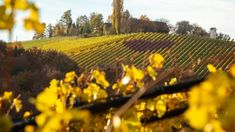 Die Natur leuchtet in wunderbaren Herbstfarben in der Südsteiermark. Vineyard, Outdoor, Pictures, Fall Color Schemes, Campsite, Road Trip Destinations, Light Fixtures, Vacation, Nature