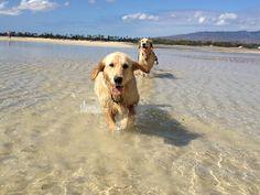 My girls at the beach!!  Photo by LBWestlake