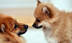 Introducing a new animal into your pack  http://www.onegreenplanet.org/animalsandnature/how-to-introduce-a-new-animal-into-your-pack/