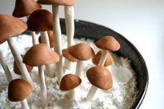 Edible Wild Sugar Mushrooms of the genus Psilocybe Cubensis 40 -As Seen in Urban Outfitters-. $120.00, via Etsy.
