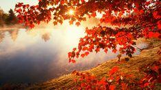 Red autumn morning / 1920 x 1080 / Nature / Photography | MIRIADNA.COM