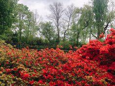 Claude Monet, Gallery, Garden, Red, Bonjour, Garten, Roof Rack, Lawn And Garden, Gardens