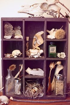 """""""Lenore."""" Cabinet of Curiosities--will have one or two of these someday! already starting on my collecting!"""