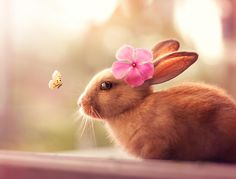 Rabbit - Welcome Spring by Ashraful Arefin on Hamsters, Baby Bunnies, Easter Bunny, Happy Easter Photos, Rabbit Wallpaper, Welcome Spring, Animation, Cute Animal Pictures, Pink Flowers