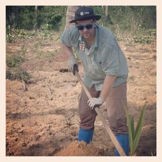 planting coconut trees in thailand.