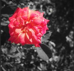 <3 photography!!!