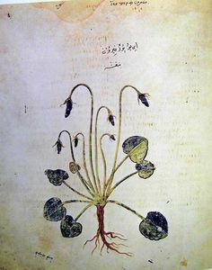 Juliana Anicia Codex, AD 512, Violet