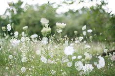 a field of flowers.