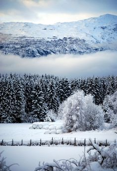 Trondheim, Norway – Amazing Pictures - Amazing Travel Pictures with Maps for All Around the World I Love Snow, I Love Winter, Winter Time, Snow Scenes, Winter Scenes, Winter Beauty, Gaia, Belle Photo, Beautiful Landscapes