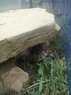 Die Schildkröten natürlich auch!