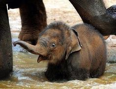 Lets be perfectly honest, elephants are basically cats... | 11 Reasons You Have To Vote For Elephants As The Next BigAnimal