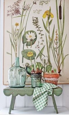 VIBEKE DESIGN - old botanical print with potted bulbs and scallop-edge stool Illustration Botanique, Botanical Illustration, Botanical Decor, Botanical Prints, Botanical Bedroom, Impressions Botaniques, Deco Champetre, Vibeke Design, Deco Nature