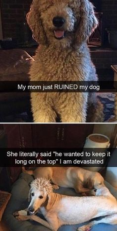 Funny animal memes - 19 Pictures Proving Childhood Can Last Forever If You Are Really Determined (Spoiler This May Provoke Bad Ideas) Funny Animal Jokes, Funny Dog Memes, Really Funny Memes, Cute Funny Animals, Funny Animal Pictures, Funny Relatable Memes, Cute Baby Animals, Funny Dogs, Animal Pics