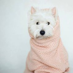 """2,694 Likes, 13 Comments - Westie Planet (@westie_planet) on Instagram: """"Looking for original Westie designs? TAP the link in my bio to find it!  Credit to:…"""""""