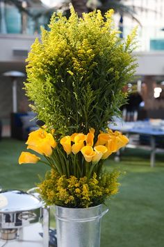 Yellow Calla Lilies | Gardening - Lily - Planter