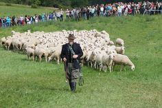 Impfung Warum wir eine Herde sind - derStandard.at