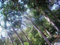 Parque Inhotim - Brumadinho - MG