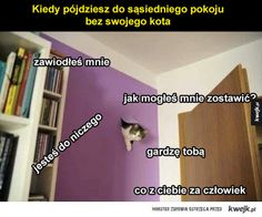 Funny Pick, Very Funny Memes, Wtf Funny, Funny Animals, Cute Animals, Polish Memes, Weekend Humor, Funny Mems, I Want To Cry