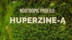 Huperzine-a nootropic profile