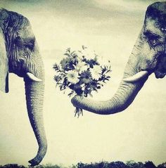 Elephants know what romance is....