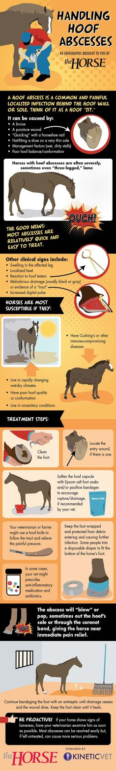 [INFOGRAPHIC] Handling Hoof Abscesses - TheHorse.com | Hoof abscesses are a common cause of severe lameness in horses. Find out how to manage one in our step-by-step visual guide, sponsored by Kinetic Vet! #horses #horsehealth #hoofcare #TheHorse