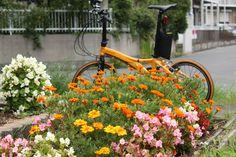 Copyright © けち 様 / 2014年 Visc. P20 / 早朝ポタリングで見つけた公園の花壇。
