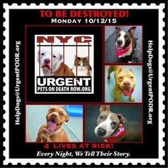 4 BEAUTIFUL LIVES TO BE DESTROYED 10/12/15 - - Please share their story and be their voice. This is a VERY HIGH KILL facility, so time is critical. YOU may be their ONLY HOPE! Click for info & Current Status: http://nycdogs.urgentpodr.org/to-be-destroyed-4915/
