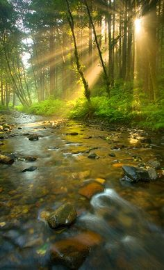 SEASONAL – SUMMER – sun rays peak through the forest that surrounds the rocky river in oregon, photo via secrets. All Nature, Amazing Nature, Nature Water, Beautiful World, Beautiful Places, Beautiful Pictures, Beautiful Forest, Landscape Photography, Nature Photography
