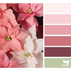 Design Seeds celebrate colors found in nature and the aesthetic of purposeful living. Yarn Color Combinations, Colour Schemes, Color Harmony, Color Balance, Design Seeds, Color Concept, Decoration Entree, Colour Pallette, Color Swatches