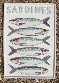 Handpainted sardines in white box frame.73cm x 50 cm  www.fish-and-ships.com