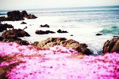 Pacific Grove, California,