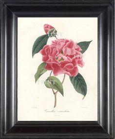 CAMELLIA PRINT Berlese 8x10 Art Print 4 Beautiful by LoveThePrint, $10.00