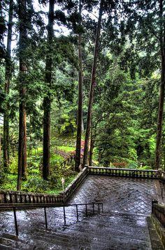 Gardens in Nikko, Tochigi, Japan http://www.amazon.com/Tapioca-Fire-Suzanne-Gilbert/dp/1492701173/ref=sr_1_1?ie=UTF8&qid=1384881539&sr=8-1&keywords=tapioca+fire