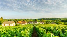 The Beginners Guide to Visiting Champagne - Condé Nast Traveler