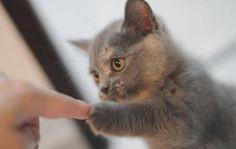 Kitty fist bump.