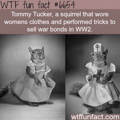 WTF Fun Facts is updated daily with interesting & funny random facts. We post about health, celebs/people, places, animals, history information and much more. New facts all day - every day! Wow Facts, Wtf Fun Facts, Funny Facts, Random Facts, Random Stuff, Fun Facts About Animals, Animal Facts, Interesting Information, Interesting History