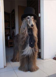 Meet Cash, the original Elegant Gothic Dog. (Photo from moi-mem-moitie.tumblr.com)