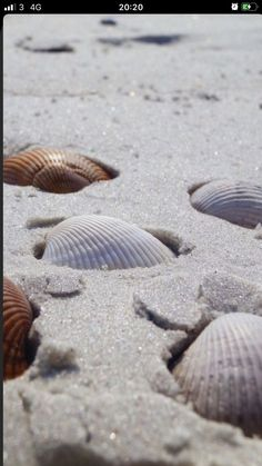 'The course helped me get my Pinterest account to over3 million views in 1 month I highly recommend' Beach Aesthetic, Summer Aesthetic, Orange Aesthetic, Shells And Sand, Sea Shells, Ocean Wallpaper, Wallpaper Backgrounds, Apple Wallpaper, Photowall Ideas