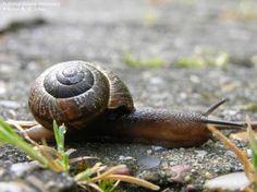 blogindlæg om langsomhed og fortabelse