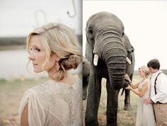 Destination Wedding in South Africa Wedding Vendors, Wedding Ideas, Safari Wedding, South African Weddings, Amazing Destinations, Wedding Things, Getting Married, Knot, Destination Wedding