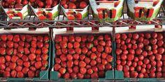 🌞 strawberry strawberries fruits  - download photo at Avopix.com for free    🆕 https://avopix.com/photo/18035-strawberry-strawberries-fruits    #strawberry #cherry #berry #strawberries #fruit #avopix #free #photos #public #domain